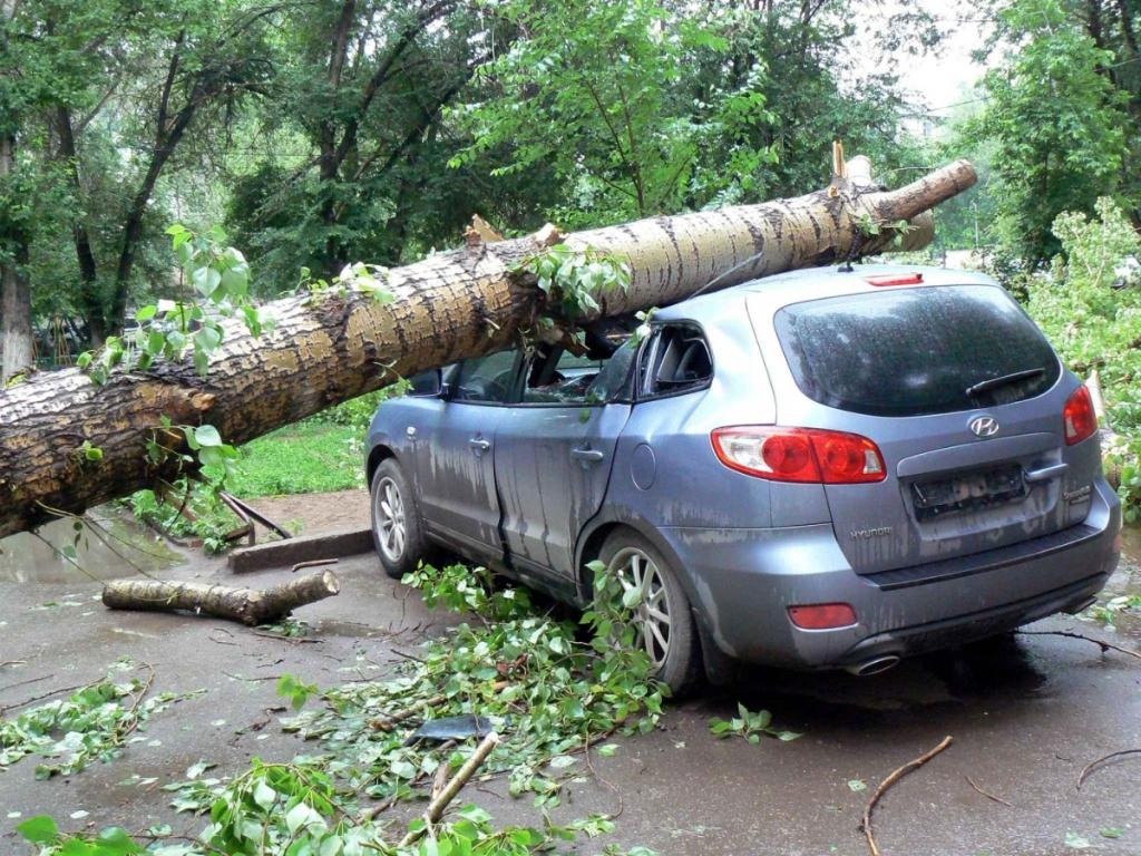 Что делать если на ваш автомобиль упало дерево?