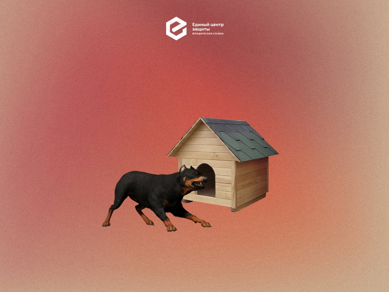 Собака лает, караван не спит: дело о компенсации за громких соседских собак (практика ЕЦЗ)