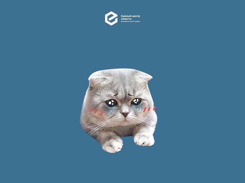 Котов обижать нельзя: история о том, как из-за кота всплыли махинации работодателя